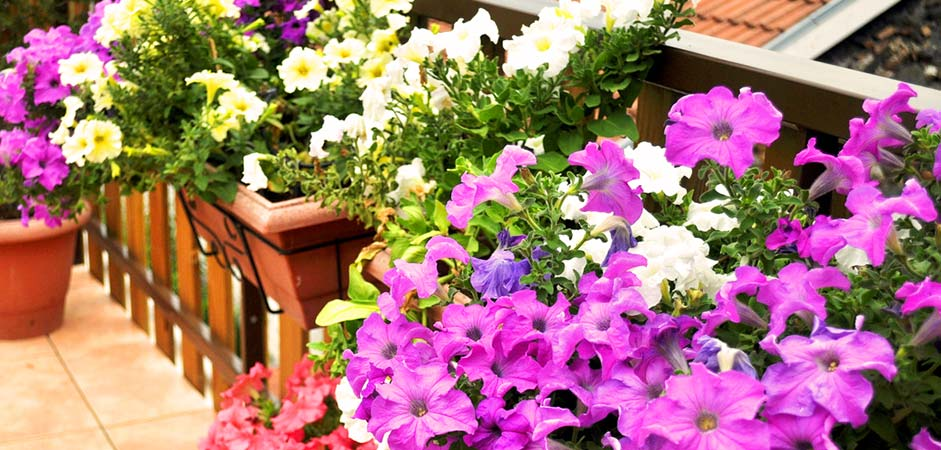 Picture of flowers in containers on a balcony